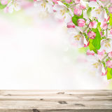 Wooden table top on blossoming apple tree blurred background Royalty Free Stock Images