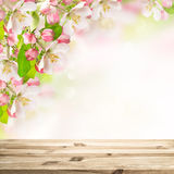 Wooden table top on blossoming apple tree blurred background Royalty Free Stock Photos