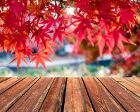 Wooden table top on blurred red Maple leaves in corridor. Garden Royalty Free Stock Photo