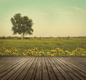 Wooden table top in open fields of dandelions Stock Photo