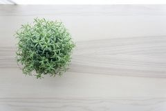 Wooden table top with small green plant in pots on window royalty free stock images