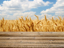 Wooden table with wheat field Royalty Free Stock Photos