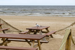 Wooden tables benches sea ocean beach seagull gull Royalty Free Stock Photo