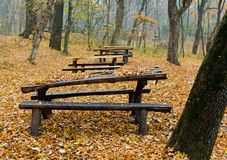 Wooden tables in the forest Royalty Free Stock Photography