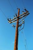 Wooden telegraph pole Stock Image