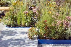 A wooden terrace and a flower bed on a local area. Modern garden design royalty free stock photo