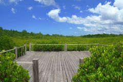 Wooden terrace with nature green stock images