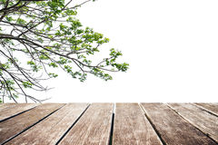 Wooden terrace, tree branches with copy space Stock Image