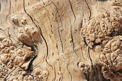 Wooden texture. The closeup of wooden texture Stock Photography