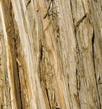 Wooden texture. Of a tree's trunk surface Royalty Free Stock Photo