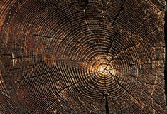 Wooden texture. Royalty Free Stock Photography