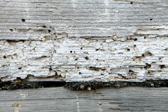 Wooden texture. Wooden texture damaged by worm Stock Images