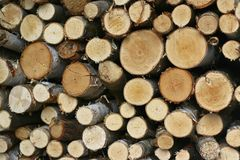 Wooden texture. Pile of logs in the barn Royalty Free Stock Photo