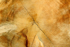 Wooden texture. Close-up as background royalty free stock photography