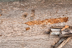 Wooden texture. Natural bark of birch useful for background Stock Images