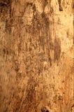 Wooden texture. Stock Photos