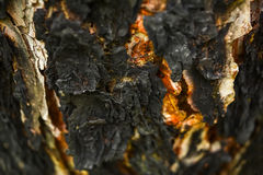 Wooden texture abstract background. Tree bark charred in the fir Royalty Free Stock Photo
