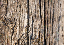 Wooden texture or background close up photo Royalty Free Stock Image