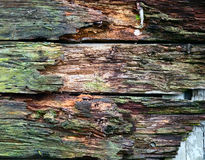 Wooden texture, background image Stock Image