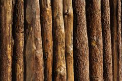 Wooden texture background. Many round woods background royalty free stock image
