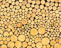 Wooden texture backgrounds Stock Image