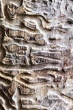 Wooden texture with bark beetle ways Stock Photography