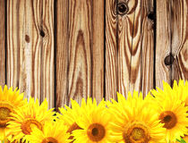 Wooden texture and border with yellow sunflowers Stock Photography