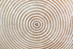 Wooden texture with circles stock photography