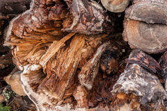 Wooden texture. Close-up the end of felled rotten mouldering tre Stock Photo