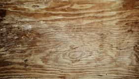 Wooden texture. Closeup of wood texture background Stock Images