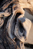 Wooden Texture Damaged Stock Photography