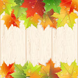 Wooden texture decorated by autumn maple leaves. Royalty Free Stock Photos