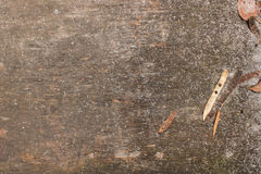 Wooden texture with dry blade. Wooden old brown texture with dry blade Stock Image