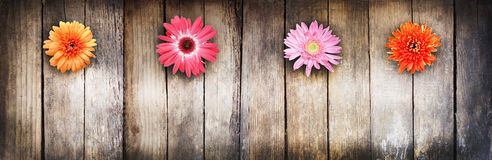Wooden texture and flowers. There is room for text. Flowers gerbera. Multicolored Stock Photos