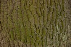 A wooden texture from a fragment of a gray green tree bark Royalty Free Stock Photography