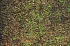 Wooden texture with green grass