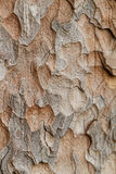 Wooden texture. Macro pine tree Stock Photo
