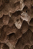 Wooden texture. Macro pine tree Stock Photos