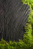 Wooden texture. Moss on black wooden old texture Royalty Free Stock Photos