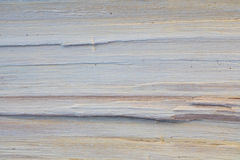 Wooden texture of natural cut tree trunk in grey color as background Royalty Free Stock Photography