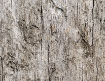 Wooden texture of oak tree Stock Image