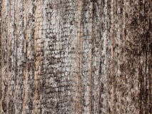 Wooden texture. Texture of old wooden plank Stock Image