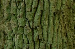 Wooden texture of a piece of gray green tree bark Stock Photography
