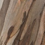 Wooden texture. Platan tree. Natural texture background. Abstract background stock photos
