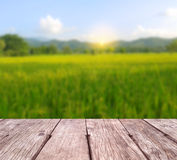Wooden texture with rice field Stock Image