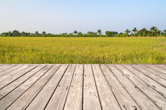 Wooden texture with rice field Royalty Free Stock Image