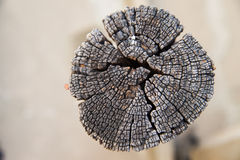 Wooden texture of stump Royalty Free Stock Images