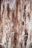 Wooden texture. Of the tree Royalty Free Stock Photography