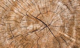 Wooden texture of a tree trunk,Background texture. Royalty Free Stock Photos