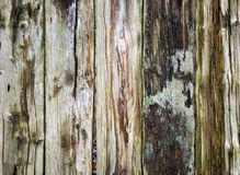 Wooden texture of wood composition Royalty Free Stock Photos
